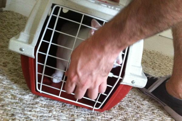 como transportar meu cachorro no carro 4