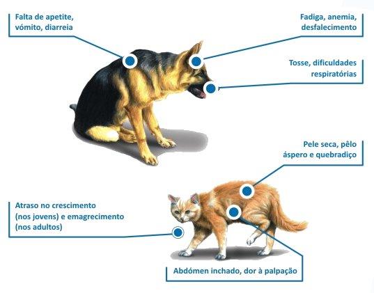 Que sintomas na presença de vermes na pessoa